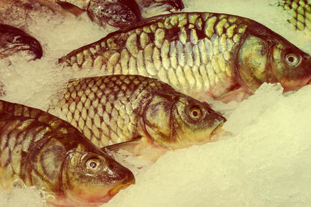 silver perch: Fresh fish on ice in the market. seafood, non-GMO and chemistry Stock Photo