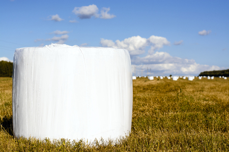 Fresh mown hay in white plastic packaging in autumn field. The agricultural landscape. toning
