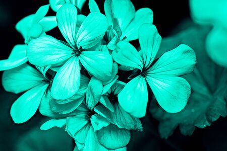 trend abstract floral background in neo mint color