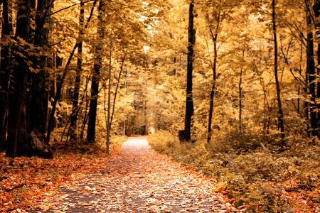 Landscape with road with fallen leaves in autumn yellow Park. season concept