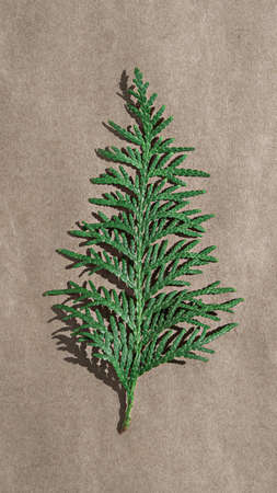 green branch of thuja on craft paper, diy, vertical Archivio Fotografico