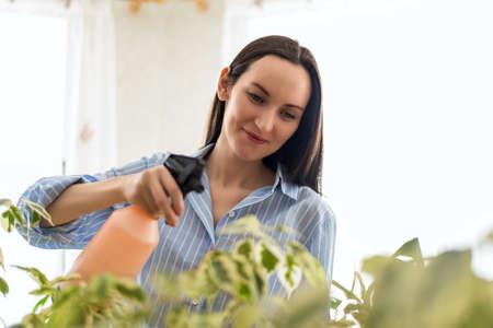 closeup caucasian woman in blue shirt sprays plants, plant care concept