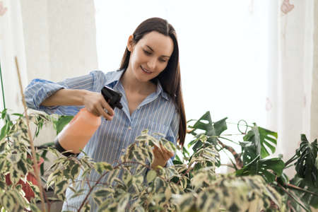 woman in blue shirt sprays household houseplants, flower greenhouse, plant care concept Фото со стока