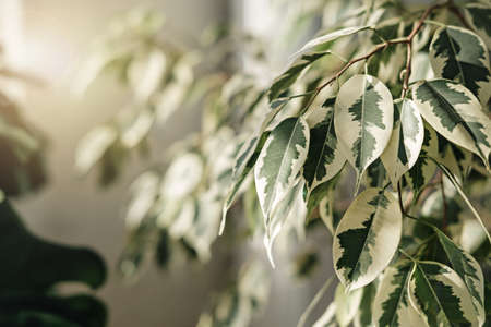 textured leaves of indoor plants, closeup