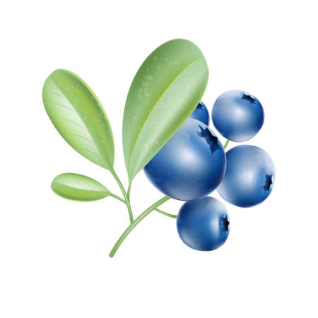 botany: Blueberries. Big crop. Garden plants pattern. Leaves on the branch. Sweet berry. Icon for the game. Vector plant. Botany. Bunch of berries. Illustration