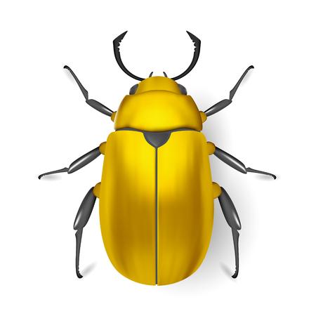 arthropod: Gold bug. Insect icon. Pads. Vector. Arthropod