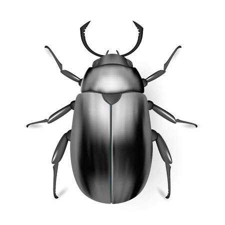 arthropod: Black bug. Insect icon. Pads. Vector. Arthropod. Illustration
