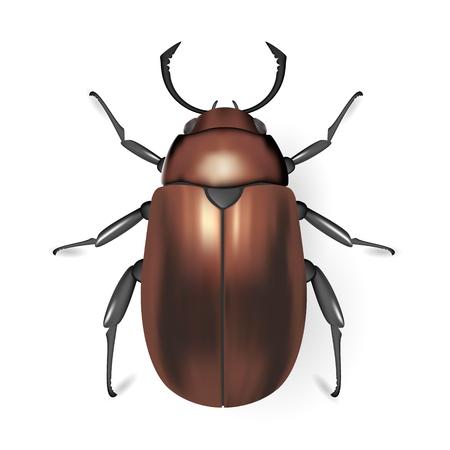 arthropod: Brown bug. Insect icon. Pads Vector. Arthropod Illustration