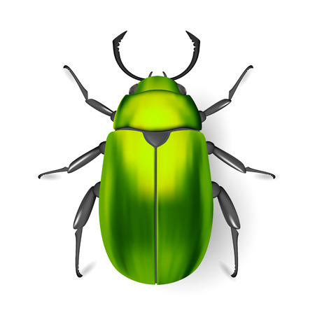 entomology: Green bug. Insect. Entomology. Studying of insects. Class of arthropods