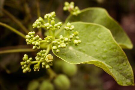 Green Flower 写真素材