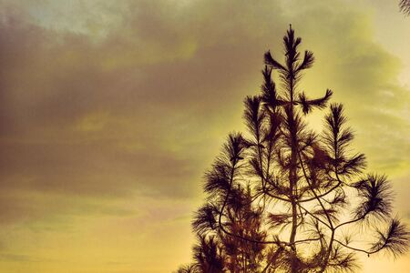 tree isolated on sky