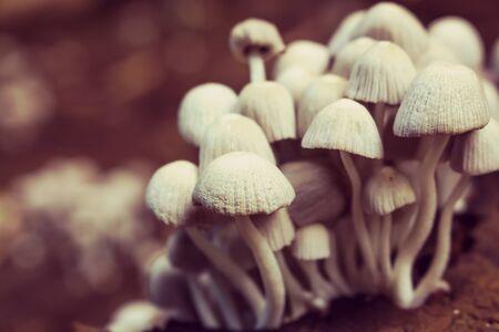야생 버섯 성장