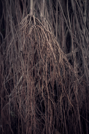twigs background