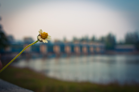 Litle Flower 스톡 콘텐츠