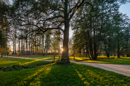 wide angle lens: Sunset in forest with wide angle lens and sun star