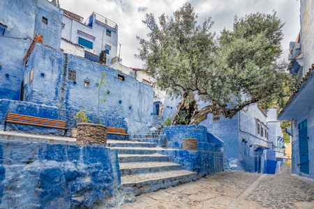 Olive tree at famous blue city of Chefchaouen, Morocco. Banque d'images