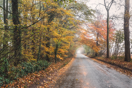 foggy road with red yellow and green colorfull leaves of UK autumn.