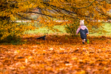Little girl running on red yellow and green colorful leaves of UK autumn.