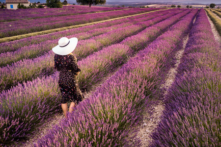 Woman in white hat in lavender field summer sunset landscape near Valensole. Provence, France. Top view.