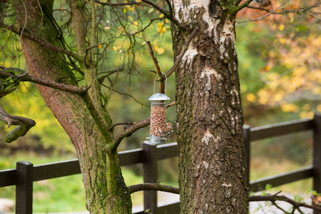 Tree feeder for birds in the forest in clear weather in Scotland