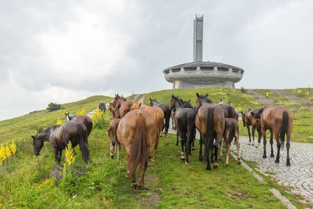Buzludzha, Bulgary - July 07 2018: Horses on the meadow the building exemplifies the futurist architecture common to many state-constructed communist buildings.