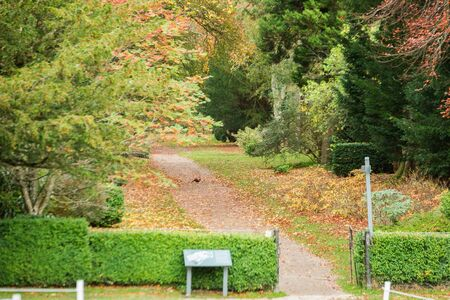 Entrance to the city park. The road is covered with fallen yellow leaves. A bird sits in the middle of the road. Scotland. Autumn day.