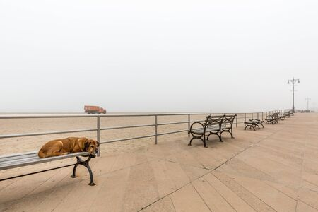 Dog sleeping on the bench and sea covered with a heavy fog in the Brighton beach at New York city, USA. Фото со стока