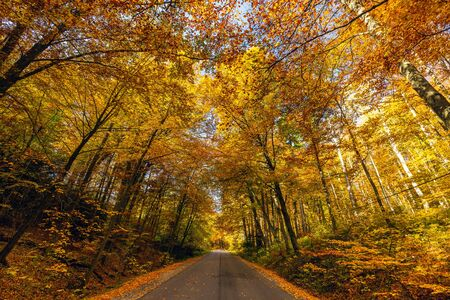 Autumn scenery of winding road, colorful trees in Ojcow National Park, Poland.