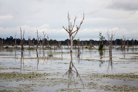 Swamp in complex Angkor Wat in Siem Reap, Cambodia in a summer day. 版權商用圖片