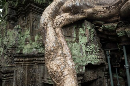 Big roots and temple ruins at Angkor Wat, Siem Reap, Cambodia.