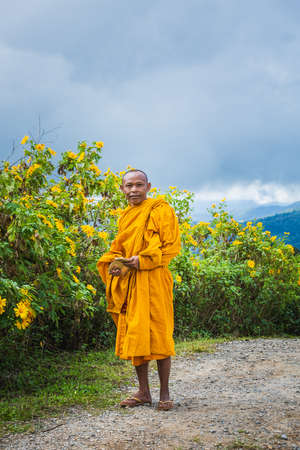 Monks come to see sunflowers bloom at Doi Inthanon park. Chiang Mai, Thailand - November 11 2017.