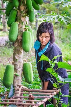 Local girl farming papayas. Chiang Mai, Thailand - November 12 2017.