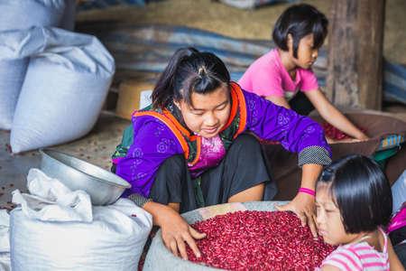 Farmer woman prepare beans on the floor. Chiang Mai, Thailand - November 12 2017.