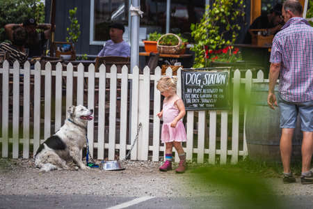 Dog near small dog sits on the leash at historic city of Arrowtown, New Zealand. Arrowtown, New Zealand - December 23 2017.