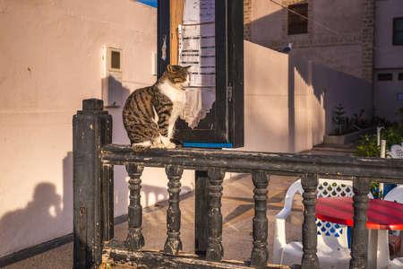 Cat at Essaouira port in Morocco. Essaouira, Morocco - April 14 2016.