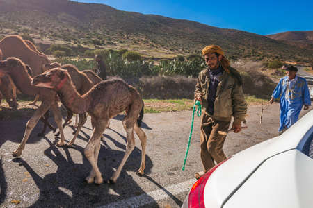 Herd of camels walking in moroccan road. Herd of one humped camels, dromedaries on the way to the camel market in Guelmim, Morocco. Guelmim, Morocco - April 16 2016.
