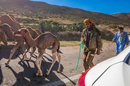 Herd of camels walking in moroccan road. Herd of one humped camels, dromedaries on the way to the camel market in Guelmim, Morocco. Guelmim, Morocco - April 16 2016. Foto de archivo - 156207677