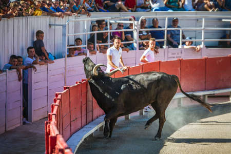 Traditional games in Arles. Men running and fighting against a Camargue-bull in the arena. Arles, France - July 27 2016. Редакционное