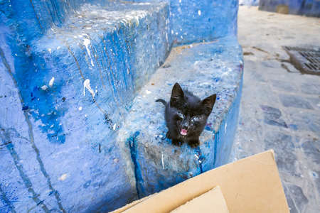 Cat at typical moroccan narrow street in Chefchaouen. Blue city medina in Morocco with blue painted walls.
