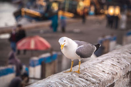 Seagull at Essaouira port in Morocco. Shot after sunset at blue hour. Foto de archivo - 156106374