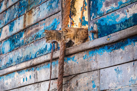 Cats and blue boats at Essaouira port in Morocco. Shot after sunset at blue hour. Foto de archivo