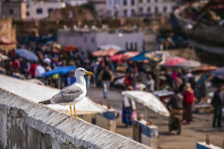 Seagull at Essaouira market in Morocco. Foto de archivo