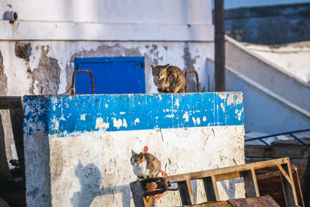 Cats at Essaouira port in Morocco. Shot after sunset at blue hour.
