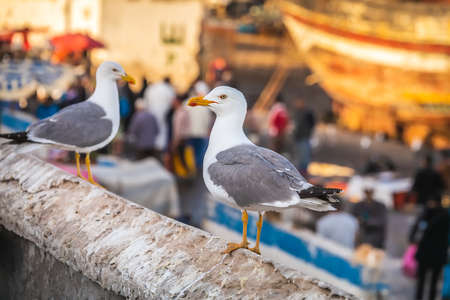Seagulls at Essaouira port in Morocco. Shot after sunset at blue hour. Foto de archivo - 156105865
