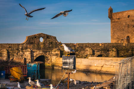 Seagulls at Essaouira port in Morocco. Shot after sunset at blue hour. Foto de archivo - 156105898