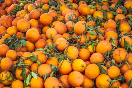 Oranges at traditional Moroccan market (souk) in Essaouira, Morocco.