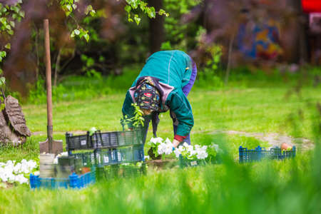 Gardener works in a botanical garden of the city of Minsk, Belarus. Spring in Minsk. Blooming lilacs and chestnuts. Walk in the city. Foto de archivo