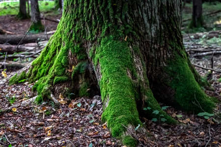 Mushrooms in the forest at Belovezhskaya Pushcha National Park, Belarus.
