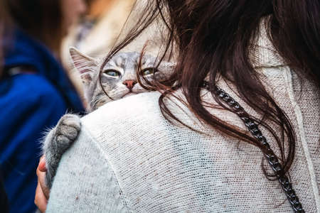 Cute cat at the protests in Minsk, Belarus. Elections in Minsk, Belarus 2020.