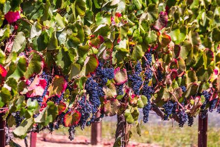 USA Sonoma winery